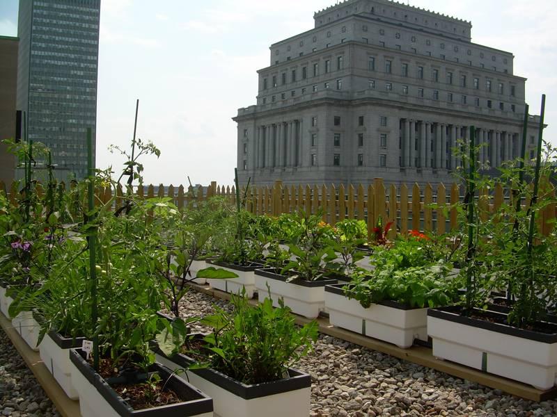 acoperis legume 1